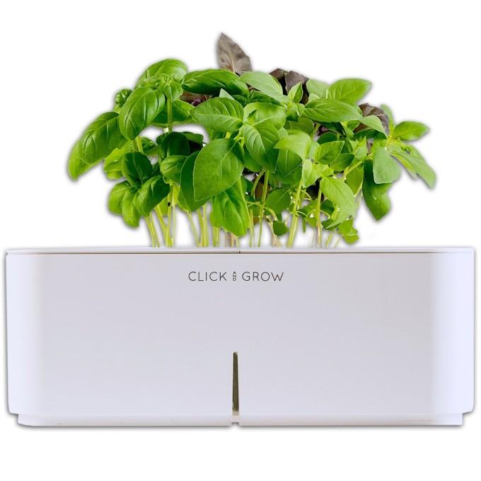Click and Grow - Basilikum